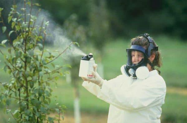 Обработка растений в специальной маске и перчатках